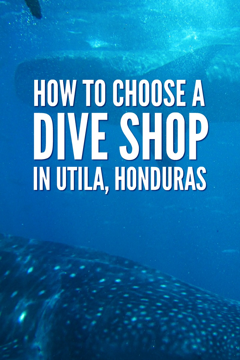 Utila dive centre: Find out what questions you need to ask to find the best one. They aren't all the same, learn from an expert.