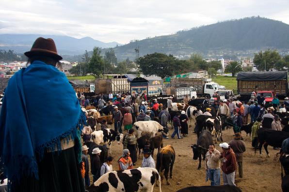 The Otavalo animal market