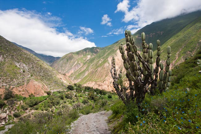 Not cut out for Colca Canyon