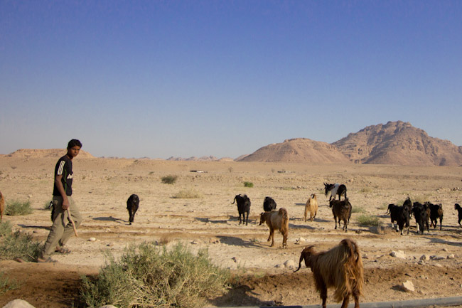A Bedouin Experience