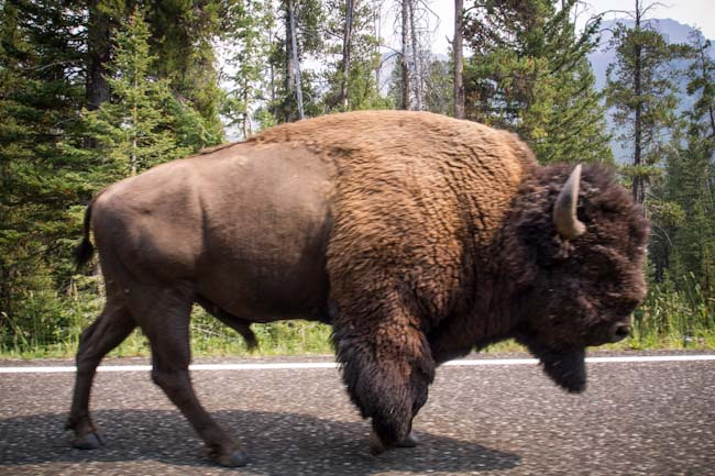 Yellowstone Park is dangerous