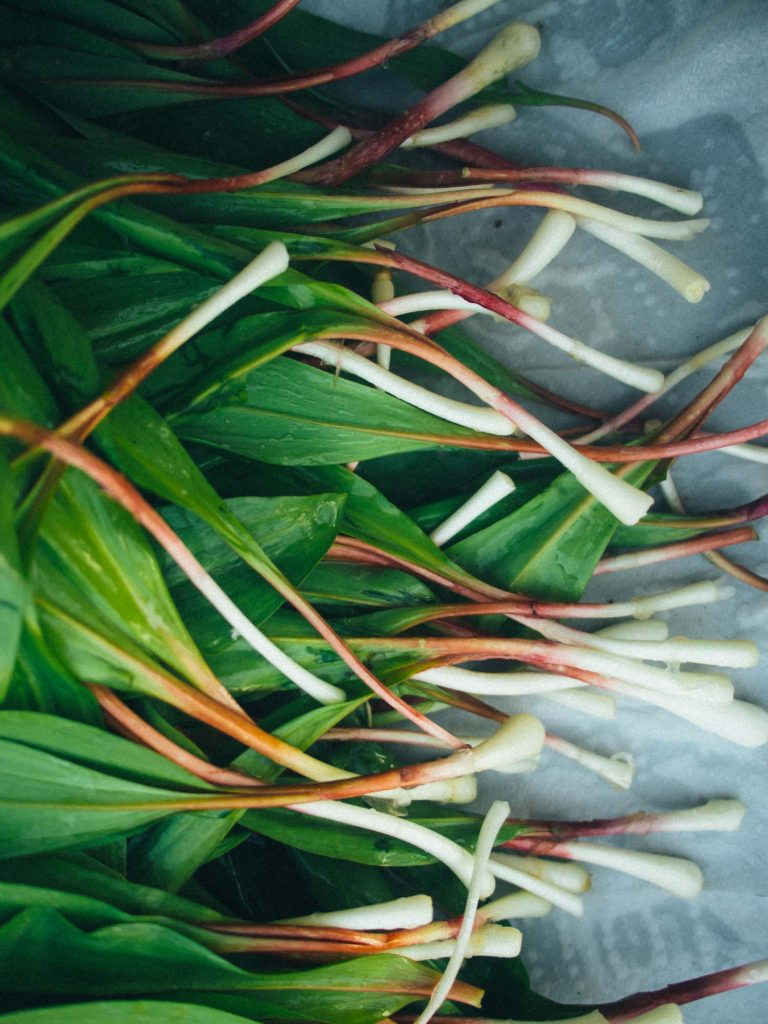 Raw ramps or wild leeks on a table
