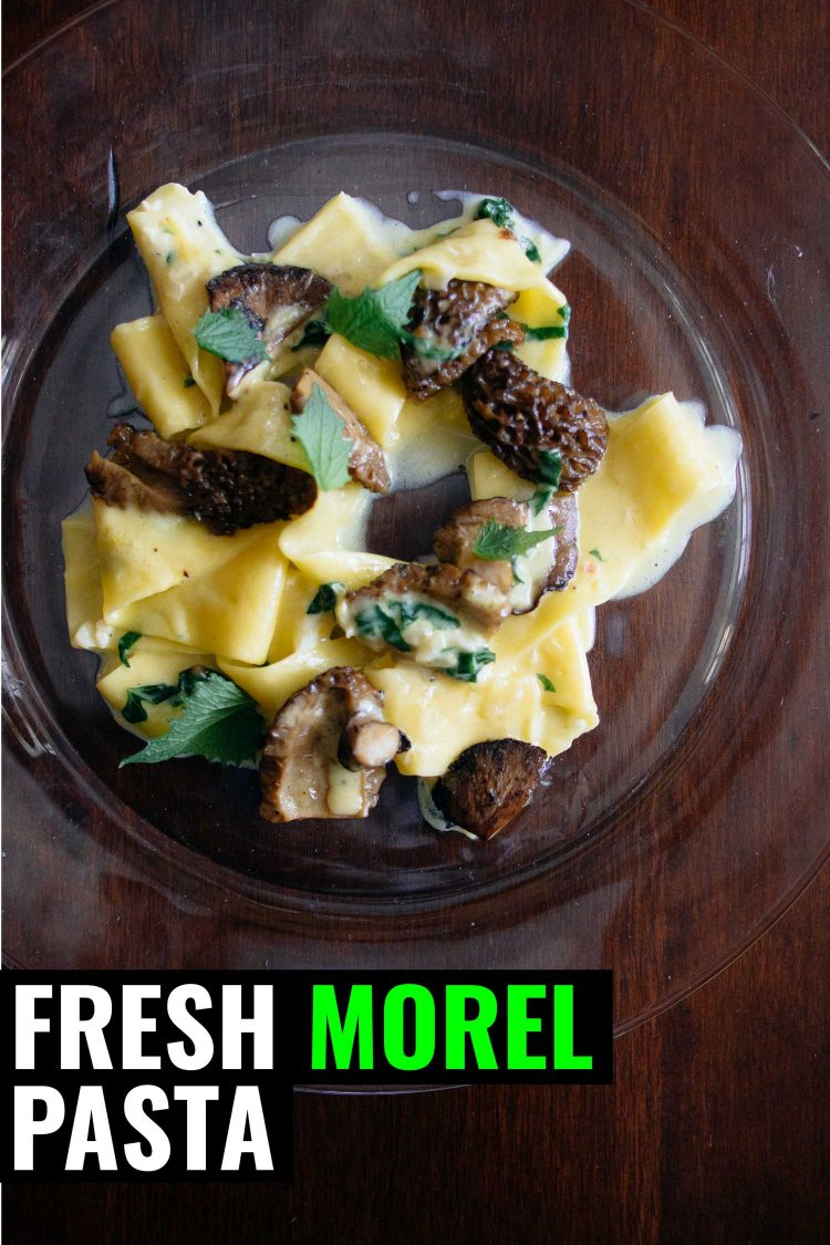 Morel mushroom pasta on a clear plate.