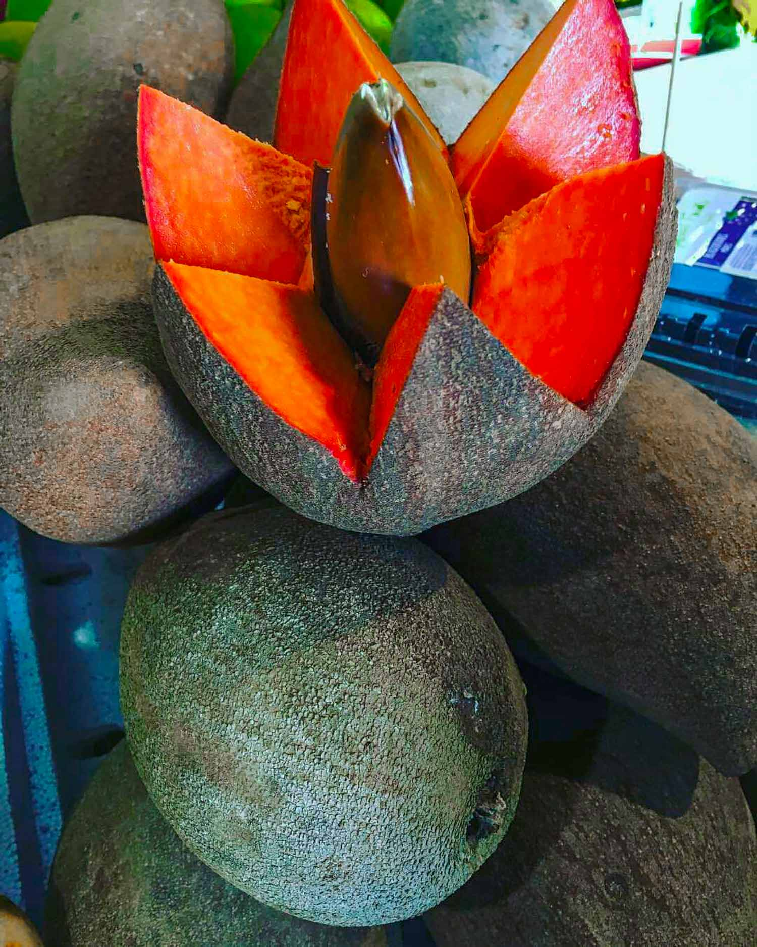 Mamey sapote is one of the exotic fruits around the world, found originally in Malaysia but now common in Cuba and the Caribbean.