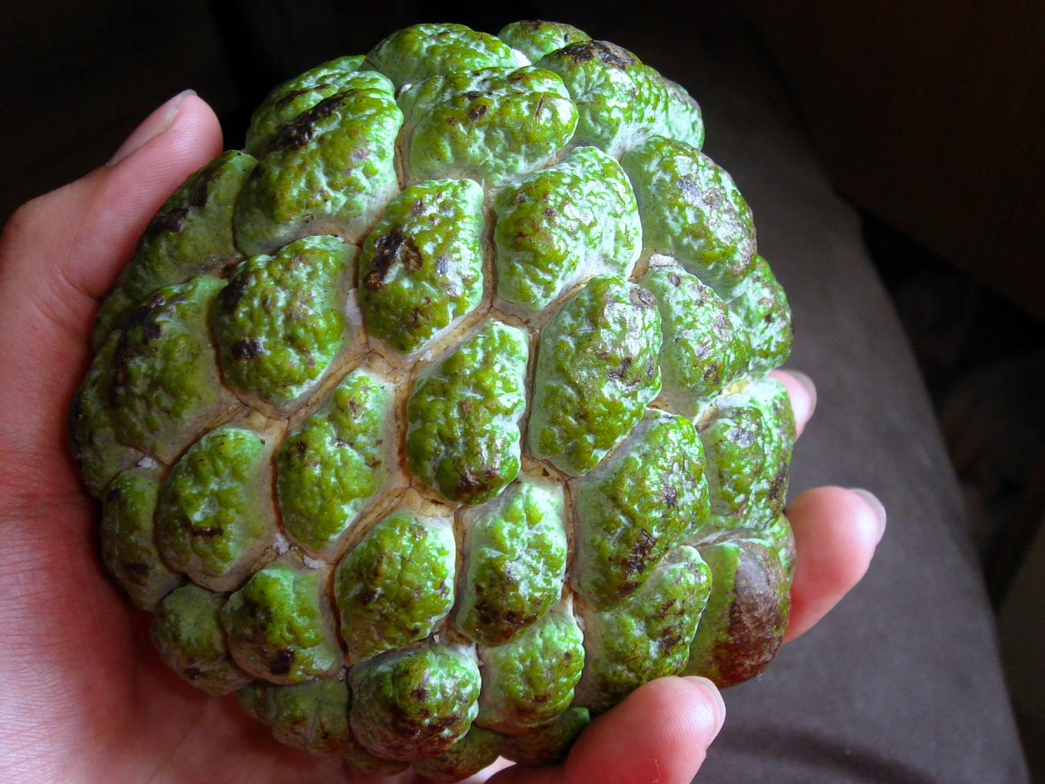 Sweetsop is one of the tastiest exotic fruits and is found in Latin America and the Caribbean.