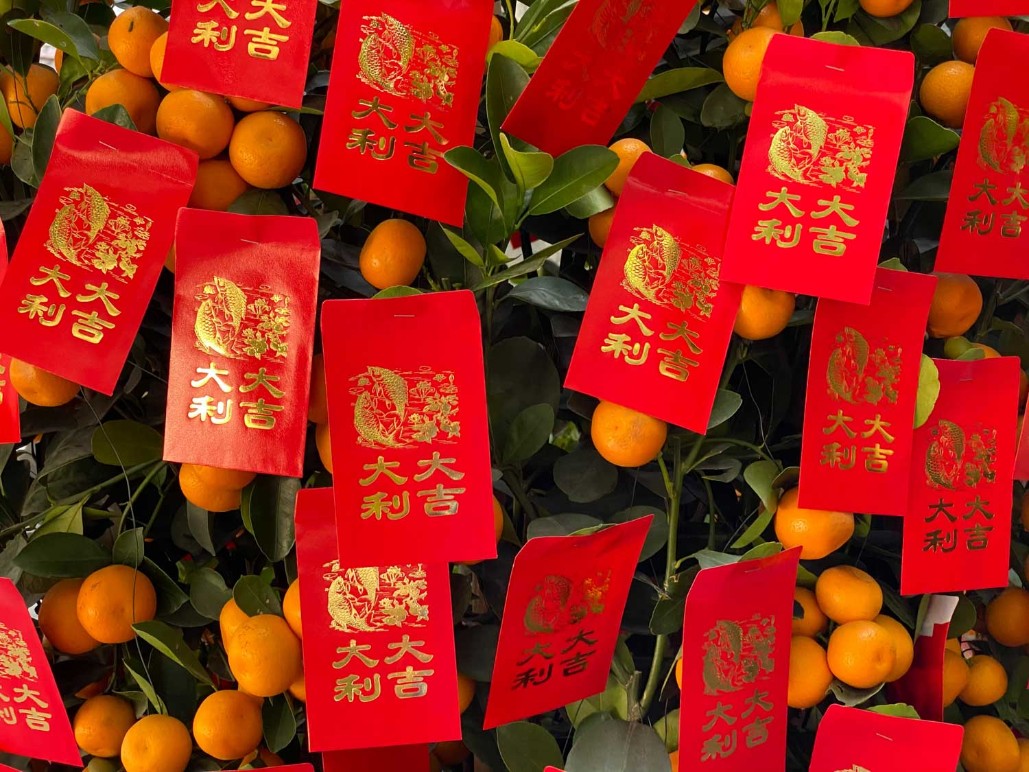 Chinese New Year oranges hanging from tree with Chinese signs in red with gold lettering