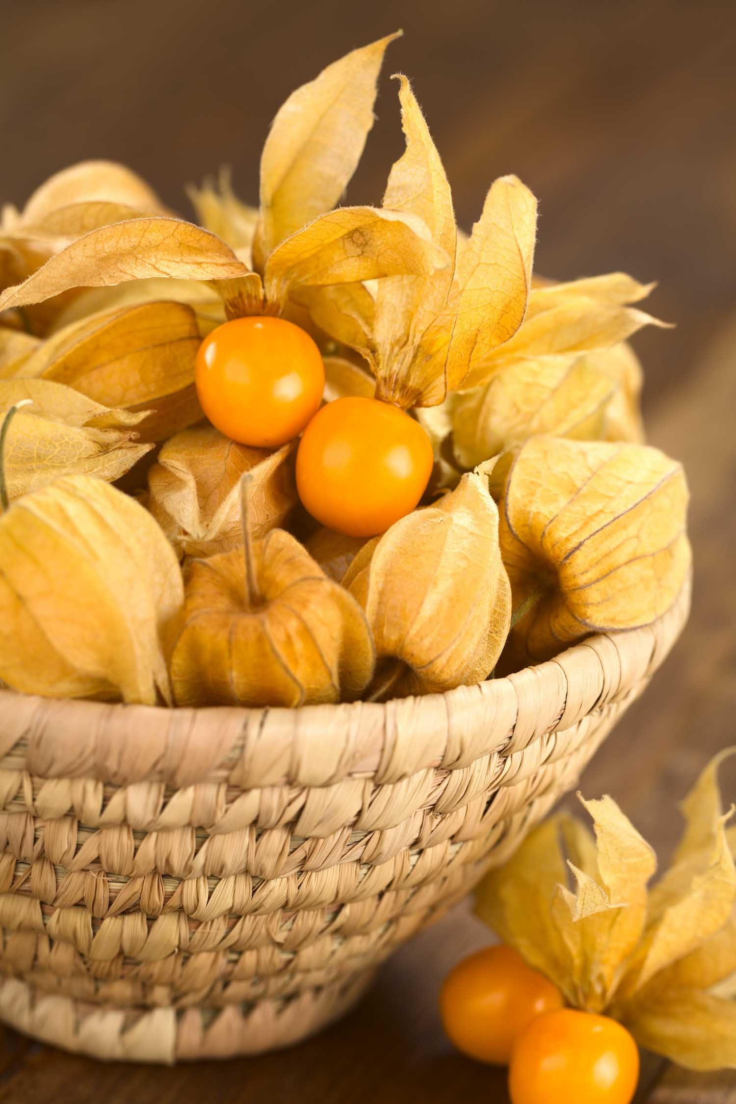 Basket of Peruvian fruit Capulin. Physalis berry fruits (lat. Physalis peruviana) with husk in basket (Selective Focus Focus on the open physalis berries in the basket)