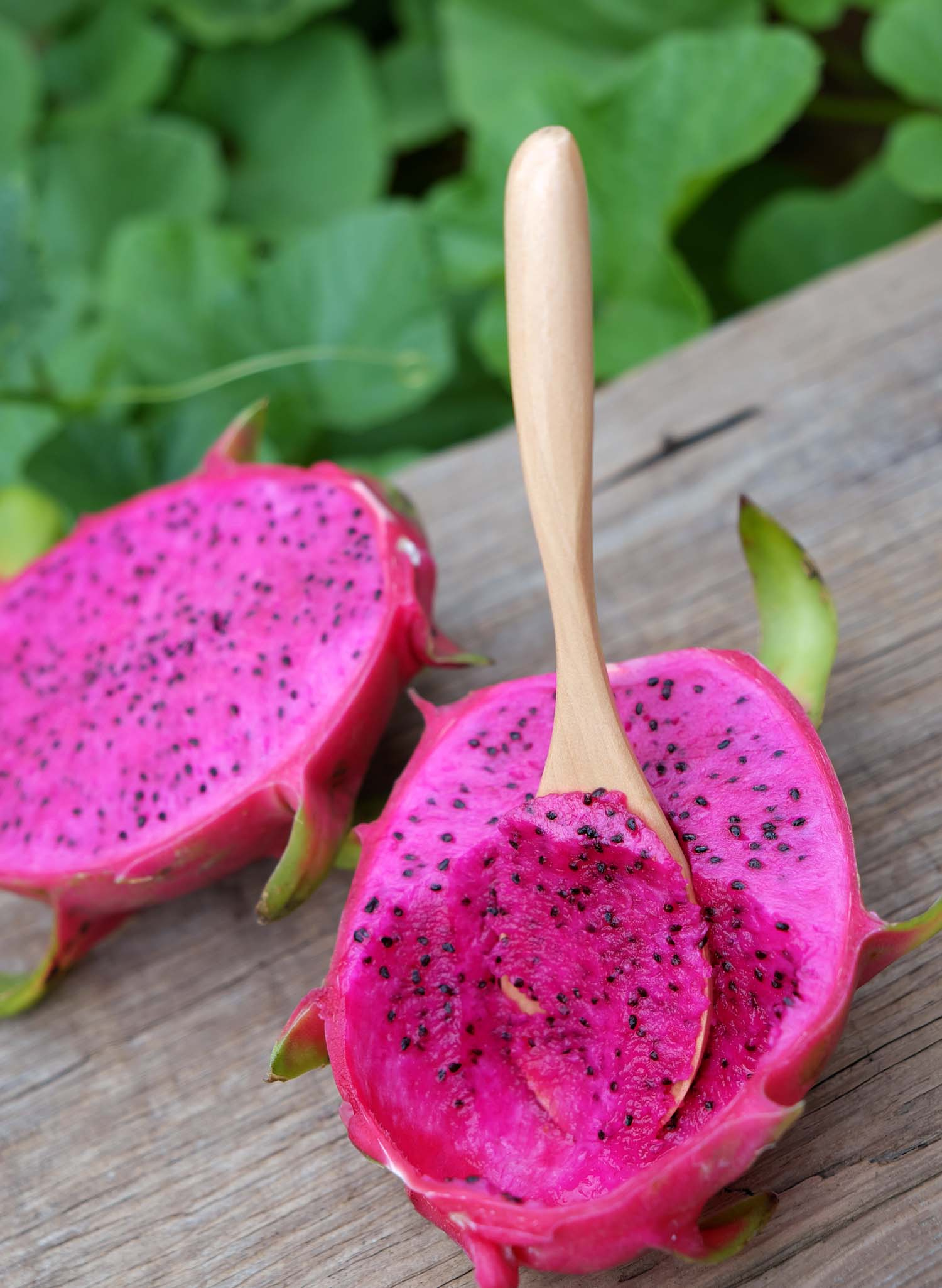 Dragon fruit a tropical Peru fruits also called pitaya agriculture product with purle pink color close up of delicious dessert at garden