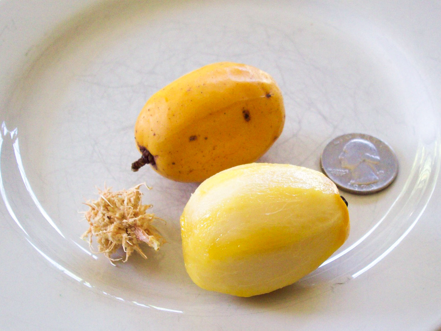 Jamaica fruit called june plums on a plate with a quarter as reference to show how small they are.