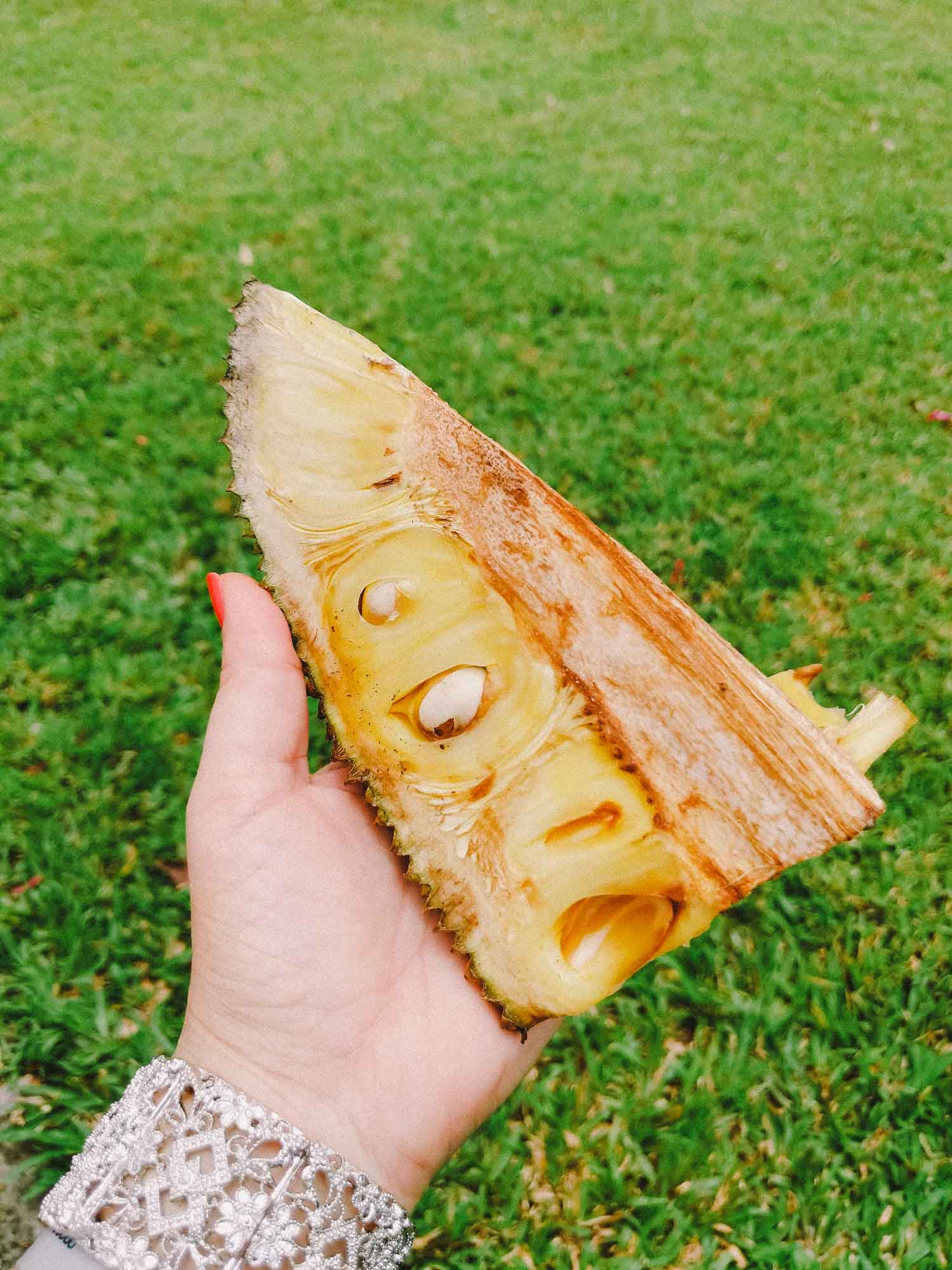 Section of Jamaican jackfruit in a hand