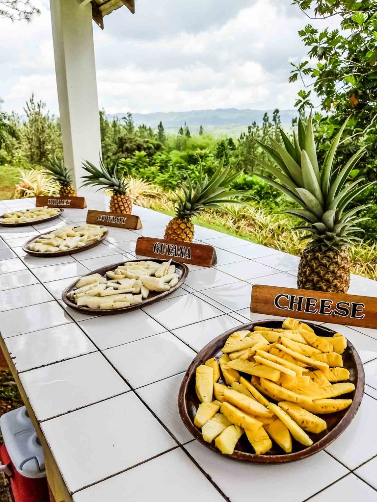 Different types of pineapple displayed in Jamaica