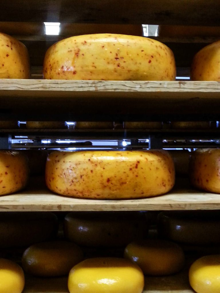 Wheels of gouda cheese on shelves