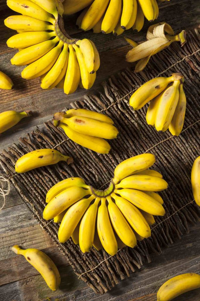 Raw Organic Yellow Baby Bananas in a Bunch