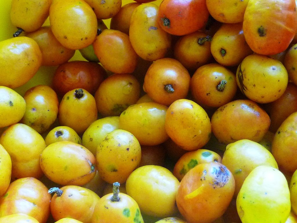 Brazilian fruit siriguela
