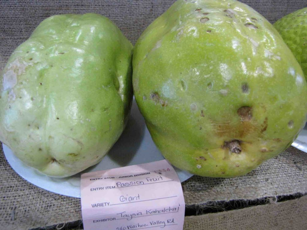 Fruit in Trinidad called Barbadine, two whole fruits on a plate